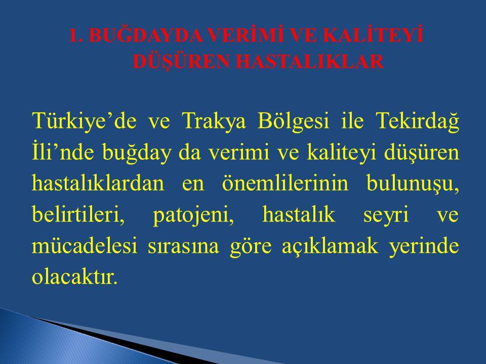Türkiye'de ve Trakya Bölgesi ile Tekirdağ İli'nde buğday da verimi ve kaliteyi düşüren hastalıklardan en önemlilerinin bulunuşu, belirtileri, patojeni