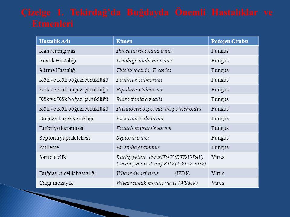 Çizelge 1. Tekirdağ'da Buğdayda Önemli Hastalıklar ve Etmenleri Hastalık AdıEtmenPatojen Grubu Kahverengi pasPuccinia recondita triticiFungus Rastık H