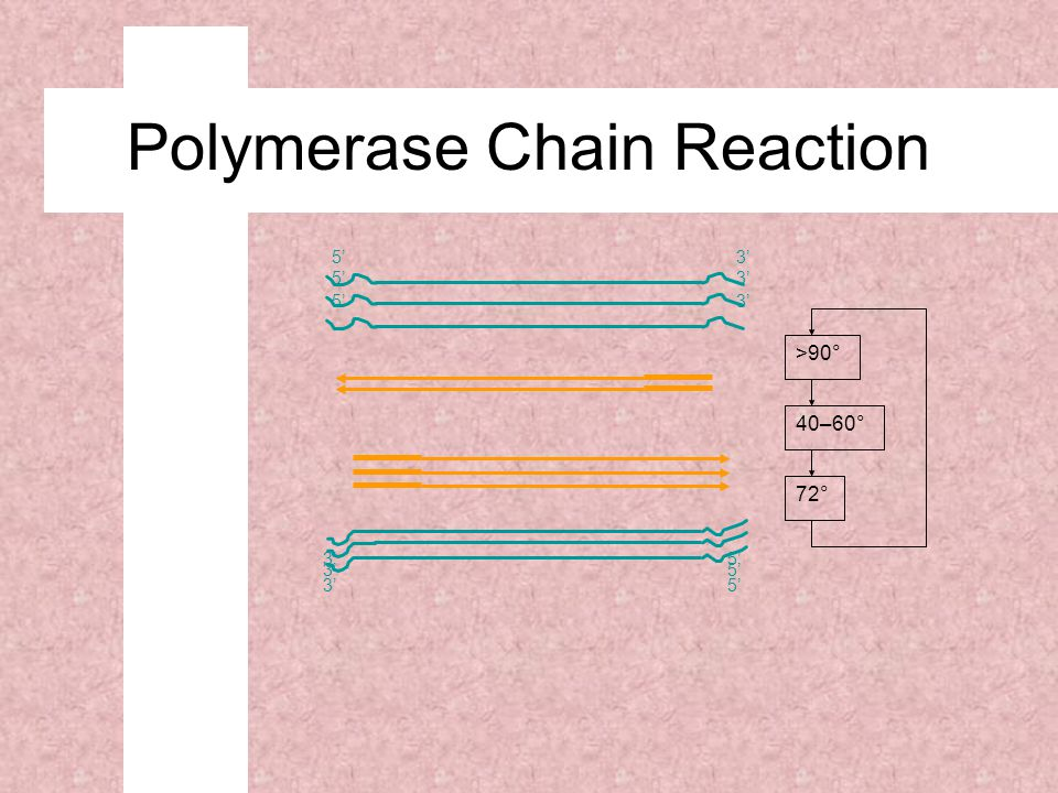 5'3' 5' 3' 5' 3' 5' 72° 40–60° >90° Polymerase Chain Reaction