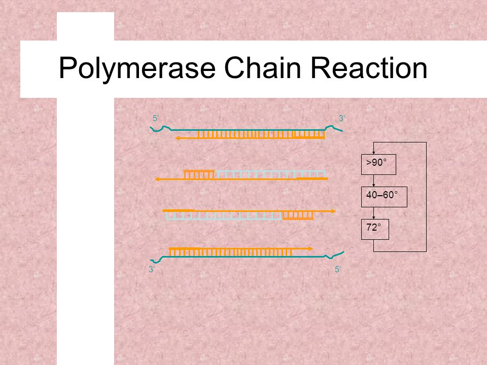 72° 40–60° >90° 5'3' 5' Polymerase Chain Reaction