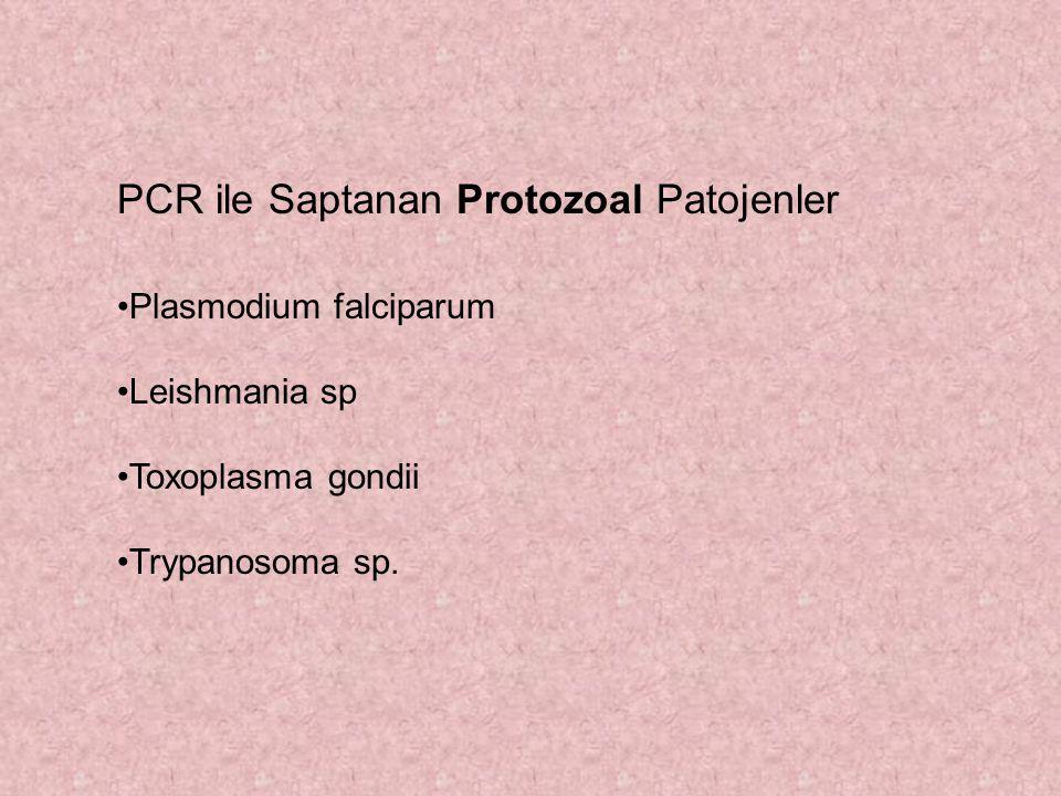 PCR ile Saptanan Protozoal Patojenler Plasmodium falciparum Leishmania sp Toxoplasma gondii Trypanosoma sp.