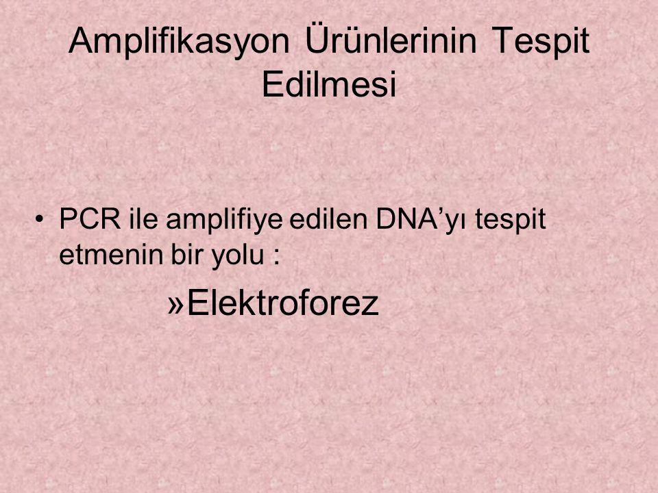 Amplifikasyon Ürünlerinin Tespit Edilmesi PCR ile amplifiye edilen DNA'yı tespit etmenin bir yolu : »Elektroforez