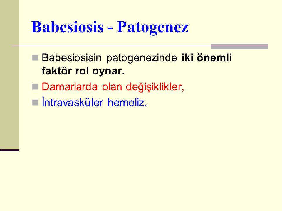 Babesiosis - Patogenez Babesiosisin patogenezinde iki önemli faktör rol oynar. Damarlarda olan değişiklikler, İntravasküler hemoliz.