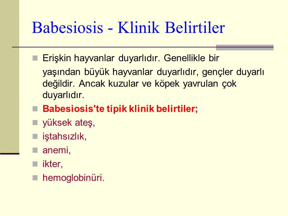 Babesiosis - Klinik Belirtiler Erişkin hayvanlar duyarlıdır. Genellikle bir yaşından büyük hayvanlar duyarlıdır, gençler duyarlı değildir. Ancak kuzul