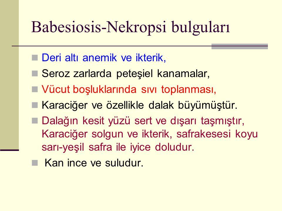 Babesiosis-Nekropsi bulguları Deri altı anemik ve ikterik, Seroz zarlarda peteşiel kanamalar, Vücut boşluklarında sıvı toplanması, Karaciğer ve özelli