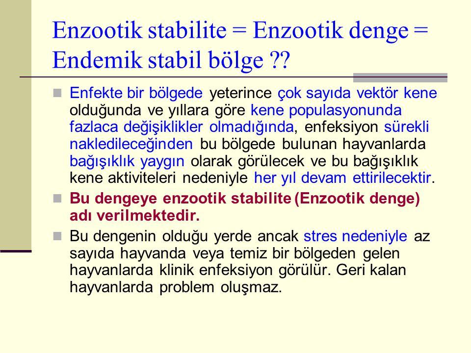 Enzootik stabilite = Enzootik denge = Endemik stabil bölge ?? Enfekte bir bölgede yeterince çok sayıda vektör kene olduğunda ve yıllara göre kene popu