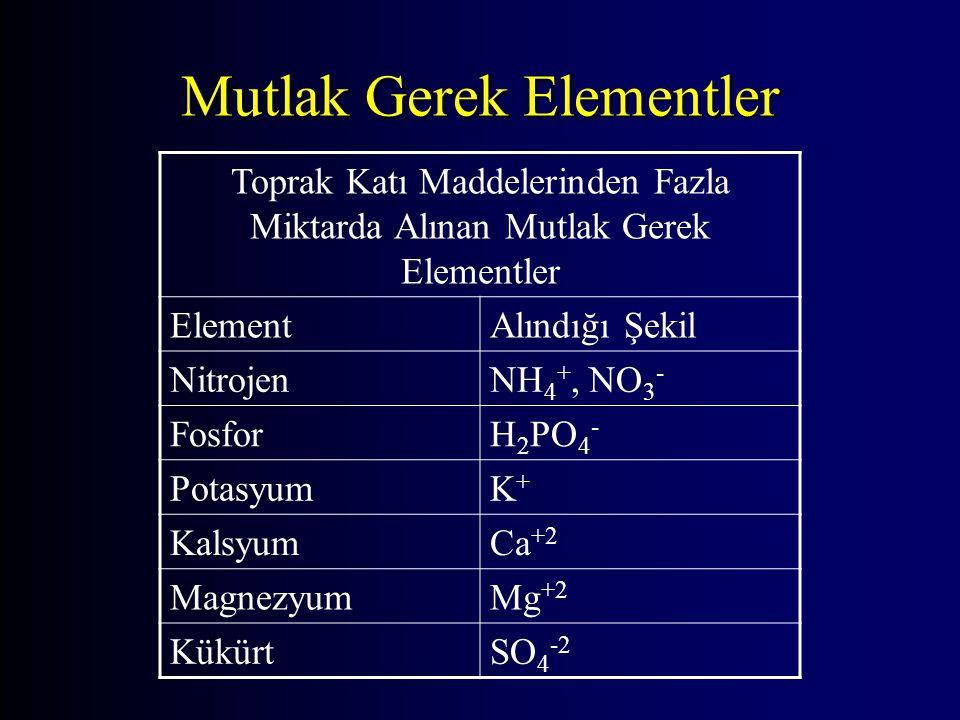 Mutlak Gerek Elementler Toprak Katı Maddelerinden Fazla Miktarda Alınan Mutlak Gerek Elementler ElementAlındığı Şekil NitrojenNH 4 +, NO 3 - FosforH 2