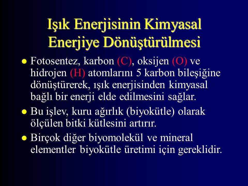 Işık Enerjisinin Kimyasal Enerjiye Dönüştürülmesi l Fotosentez, karbon (C), oksijen (O) ve hidrojen (H) atomlarını 5 karbon bileşiğine dönüştürerek, ı