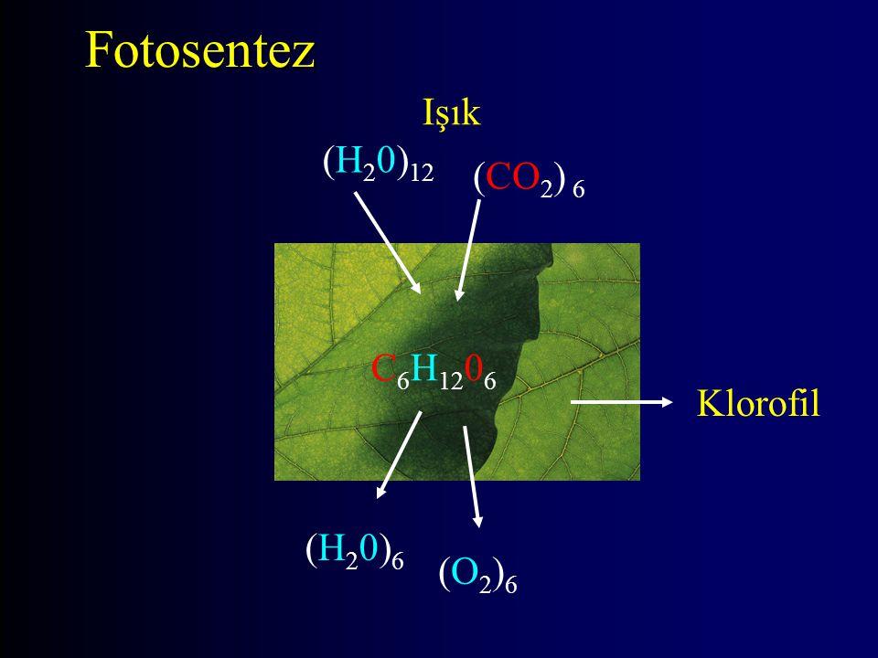 (CO 2 ) 6 (H 2 0) 12 C 6 H 12 0 6 (H20)6(H20)6 Işık (O2)6(O2)6 Klorofil Fotosentez
