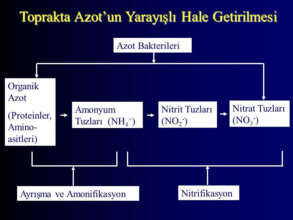 Toprakta Azot'un Yarayışlı Hale Getirilmesi Nitrit Tuzları (NO 2 - ) Organik Azot (Proteinler, Amino- asitleri) Amonyum Tuzları (NH 4 + ) Nitrat Tuzla
