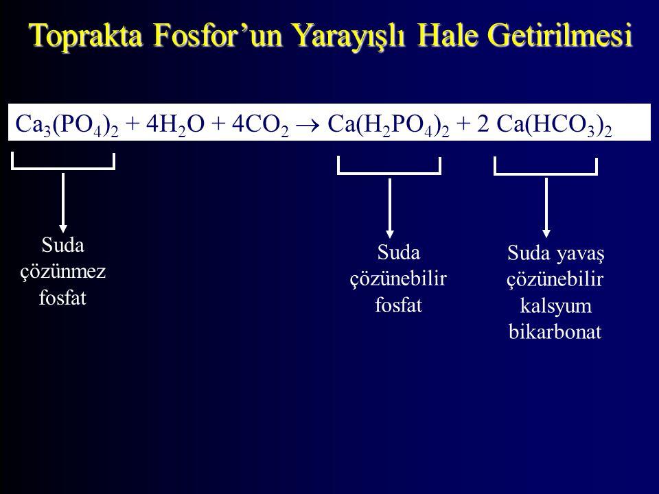 Toprakta Fosfor'un Yarayışlı Hale Getirilmesi Ca 3 (PO 4 ) 2 + 4H 2 O + 4CO 2  Ca(H 2 PO 4 ) 2 + 2 Ca(HCO 3 ) 2 Suda çözünmez fosfat Suda çözünebilir