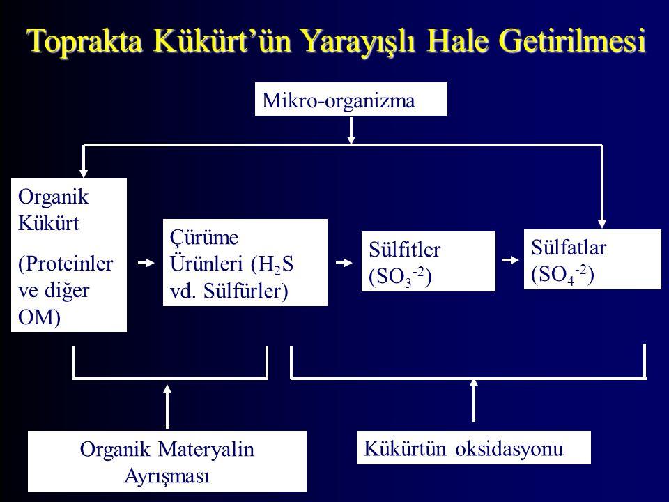 Toprakta Kükürt'ün Yarayışlı Hale Getirilmesi Sülfitler (SO 3 -2 ) Organik Kükürt (Proteinler ve diğer OM) Çürüme Ürünleri (H 2 S vd. Sülfürler) Sülfa