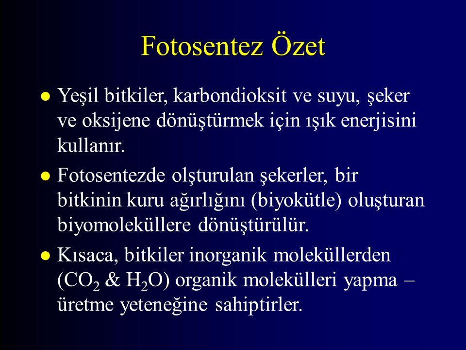 Fotosentez Özet l Yeşil bitkiler, karbondioksit ve suyu, şeker ve oksijene dönüştürmek için ışık enerjisini kullanır. l Fotosentezde olşturulan şekerl