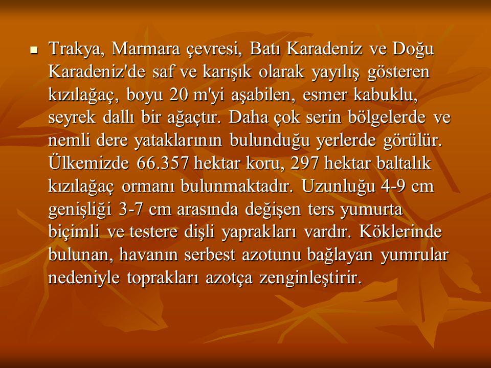 Trakya, Marmara çevresi, Batı Karadeniz ve Doğu Karadeniz'de saf ve karışık olarak yayılış gösteren kızılağaç, boyu 20 m'yi aşabilen, esmer kabuklu, s