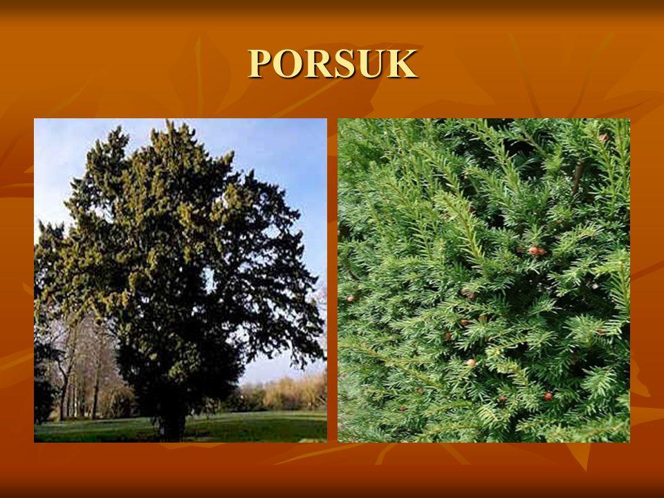 PORSUK