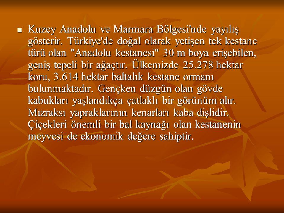 Kuzey Anadolu ve Marmara Bölgesi'nde yayılış gösterir. Türkiye'de doğal olarak yetişen tek kestane türü olan