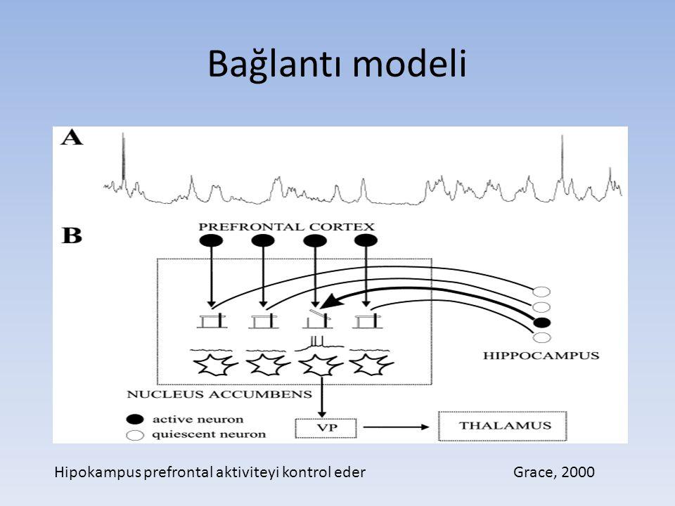 Bağlantı modeli Grace, 2000Hipokampus prefrontal aktiviteyi kontrol eder