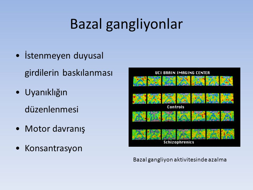 Bazal gangliyonlar İstenmeyen duyusal girdilerin baskılanması Uyanıklığın düzenlenmesi Motor davranış Konsantrasyon Bazal gangliyon aktivitesinde azal