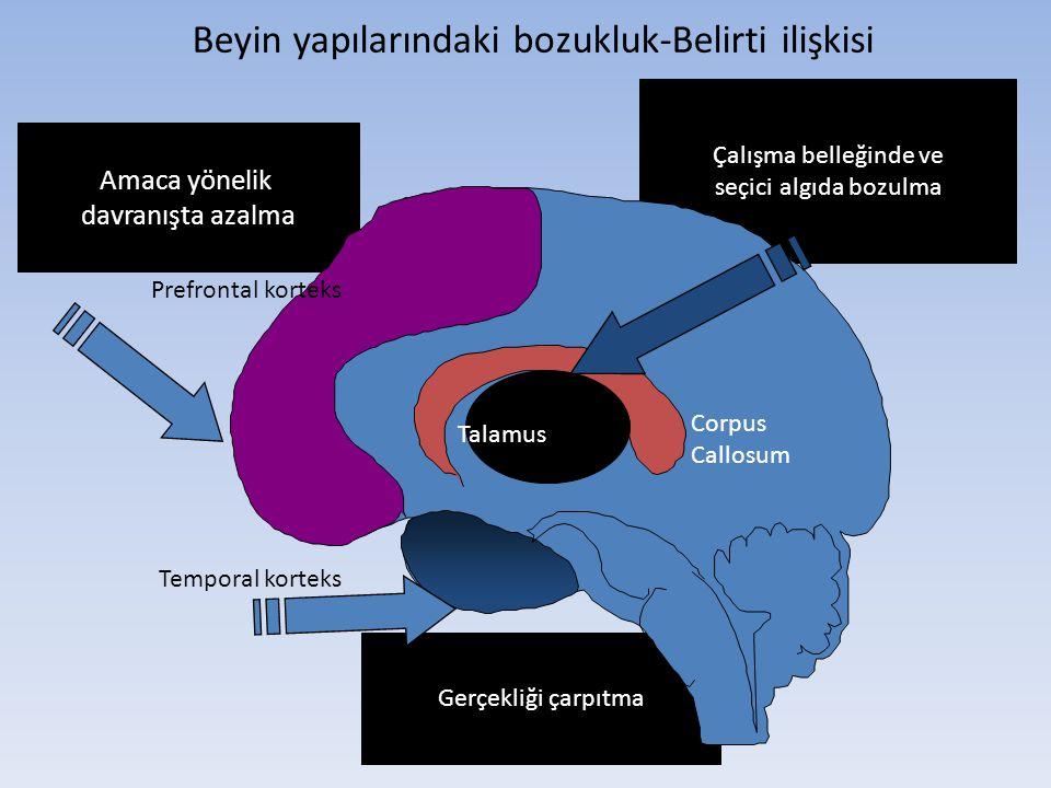 Beyin yapılarındaki bozukluk-Belirti ilişkisi Çalışma belleğinde ve seçici algıda bozulma Gerçekliği çarpıtma Amaca yönelik davranışta azalma Prefront