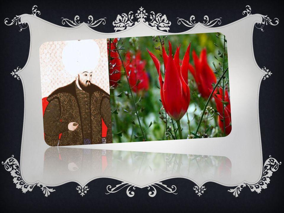 Mehmet Ebussuud Efendi Osmanlı tarihinde önemli bir yeri olan Büyük Şeyhül İslam Ebussud efendi Kanuni Sultan Süleyman döneminde hizmet etti.