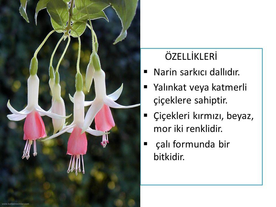 EKOLOJİK İSTEKLERİ  Sıcaklık : kışın genç bitkiler 10-14 derece yaşlı bitkiler 4-7 derece sıcaklığa ihtiyaç duyarlar.