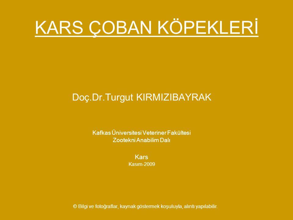 KARS ÇOBAN KÖPEKLERİ Doç.Dr.Turgut KIRMIZIBAYRAK Kafkas Üniversitesi Veteriner Fakültesi Zootekni Anabilim Dalı Kars Kasım-2009 © Bilgi ve fotoğraflar, kaynak göstermek koşuluyla, alıntı yapılabilir.