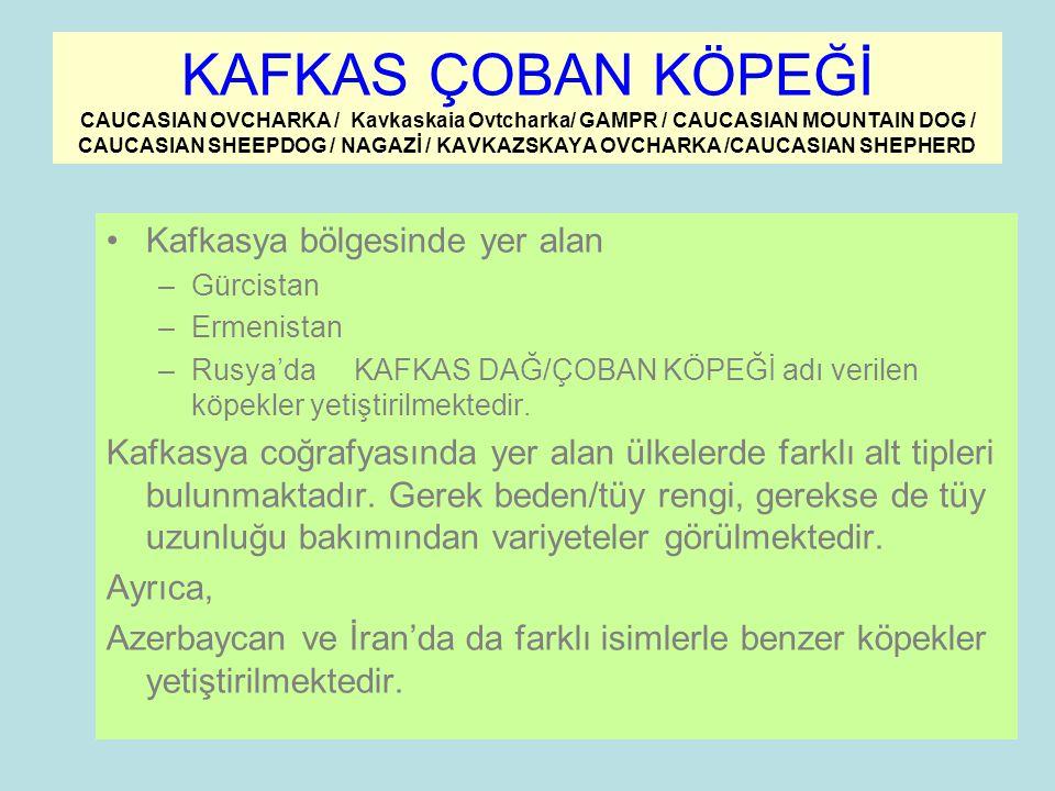 KAFKAS ÇOBAN KÖPEĞİ CAUCASIAN OVCHARKA / Kavkaskaia Ovtcharka/ GAMPR / CAUCASIAN MOUNTAIN DOG / CAUCASIAN SHEEPDOG / NAGAZİ / KAVKAZSKAYA OVCHARKA /CAUCASIAN SHEPHERD Kafkasya bölgesinde yer alan –Gürcistan –Ermenistan –Rusya'da KAFKAS DAĞ/ÇOBAN KÖPEĞİ adı verilen köpekler yetiştirilmektedir.