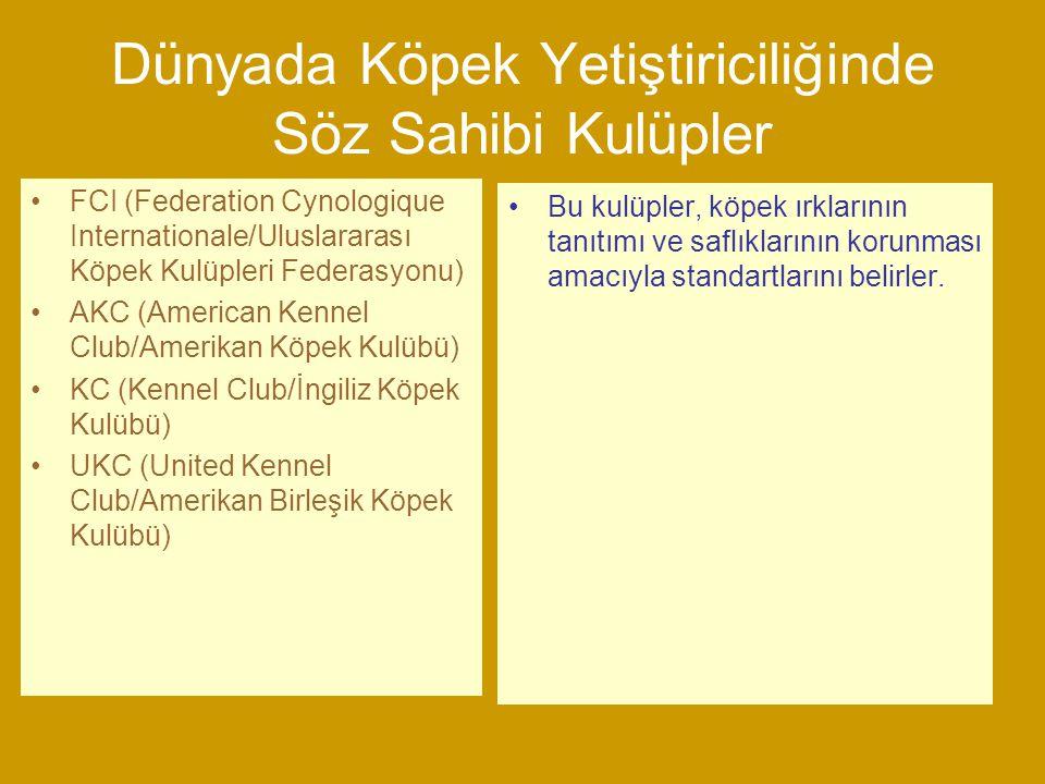 Türk Köpek Irkları Çoban (Sürü Koruma) Köpekleri Av Köpekleri Bekçi Köpekleri ile Karışık genotipli köpekler