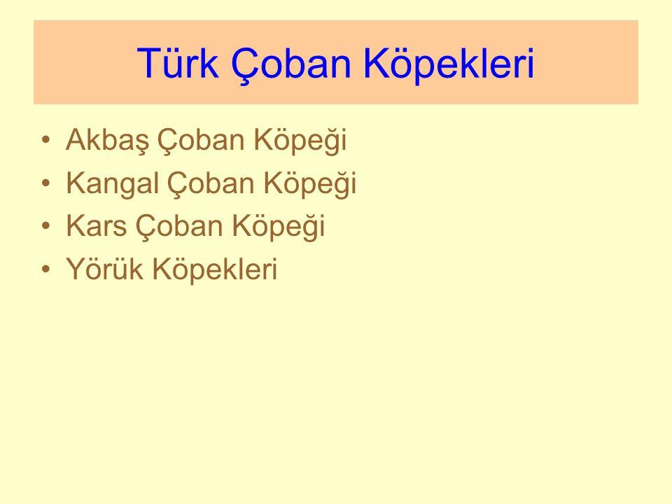Türk Çoban Köpekleri Akbaş Çoban Köpeği Kangal Çoban Köpeği Kars Çoban Köpeği Yörük Köpekleri