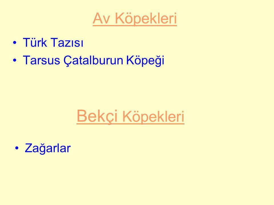 Kars köpeği, Türkiye coğrafyasının Kafkaslara komşu olan Kuzey Doğu Anadolu bölgesi içinde yaygınlık göstermektedir.