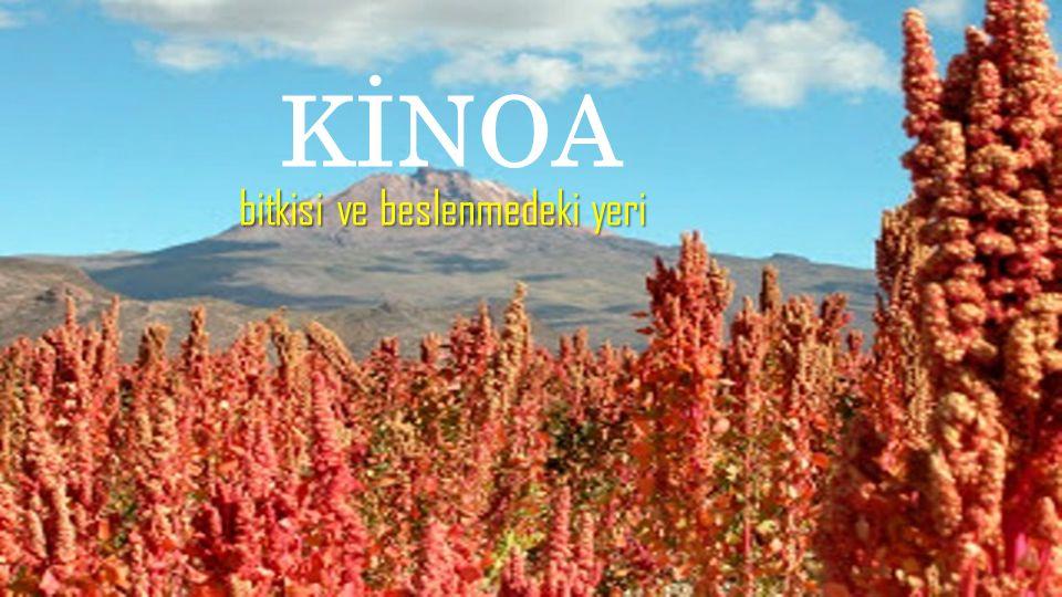 Susam ailesinden gelen kinoa aynı zamanda bir Mg kaynağıdır.