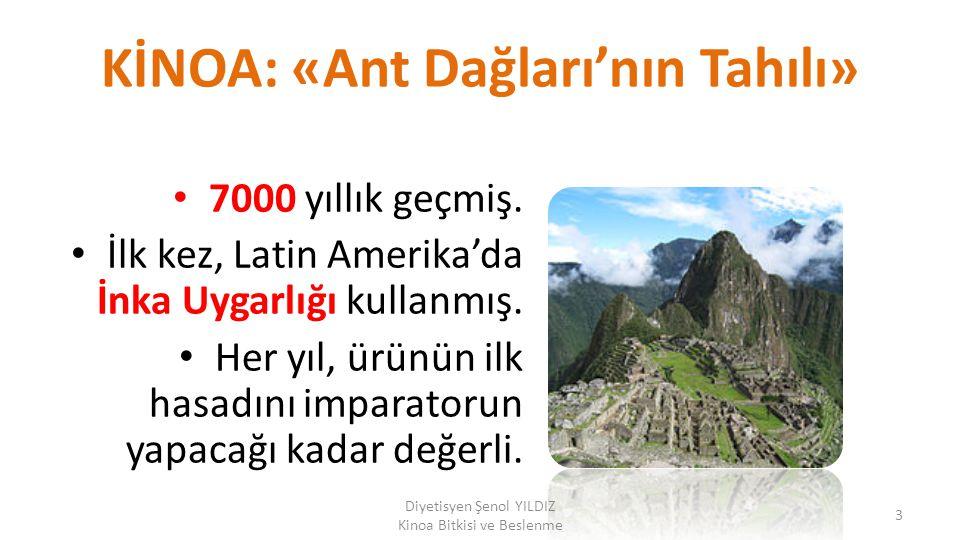 KİNOA: «Ant Dağları'nın Tahılı» 7000 yıllık geçmiş. İlk kez, Latin Amerika'da İnka Uygarlığı kullanmış. Her yıl, ürünün ilk hasadını imparatorun yapac