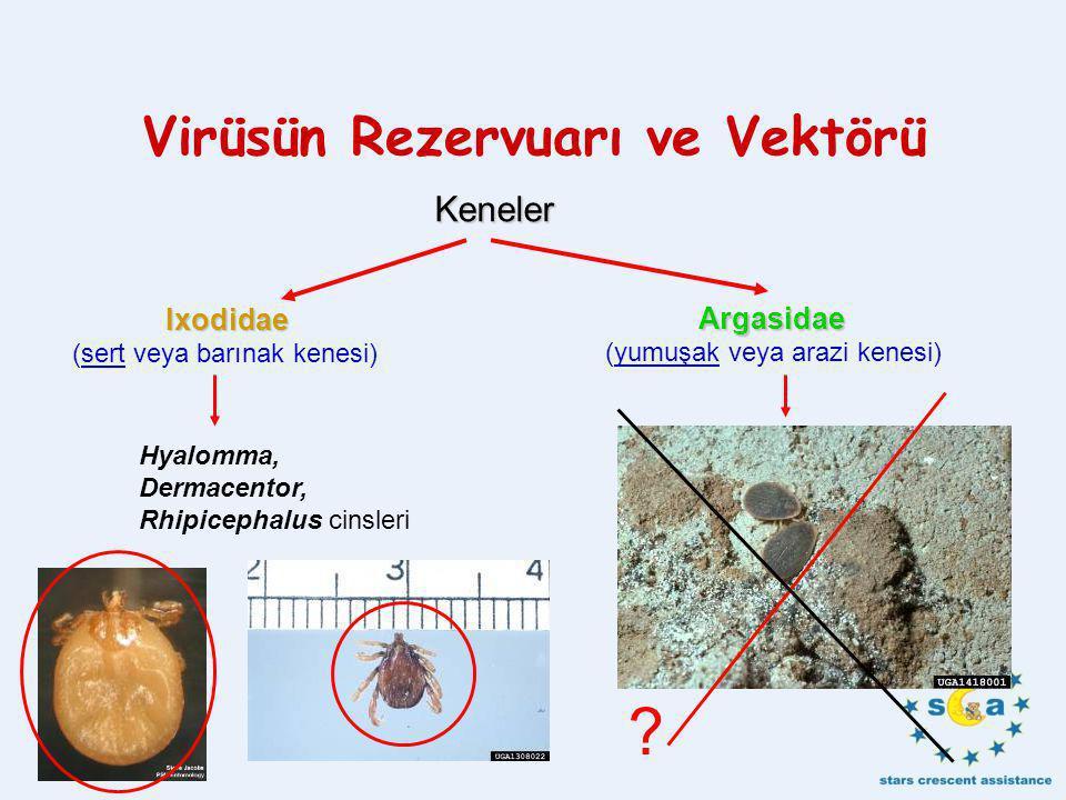 Virüsün Rezervuarı ve Vektörü Keneler Ixodidae (sert veya barınak kenesi) Argasidae (yumuşak veya arazi kenesi) Hyalomma, Dermacentor, Rhipicephalus cinsleri