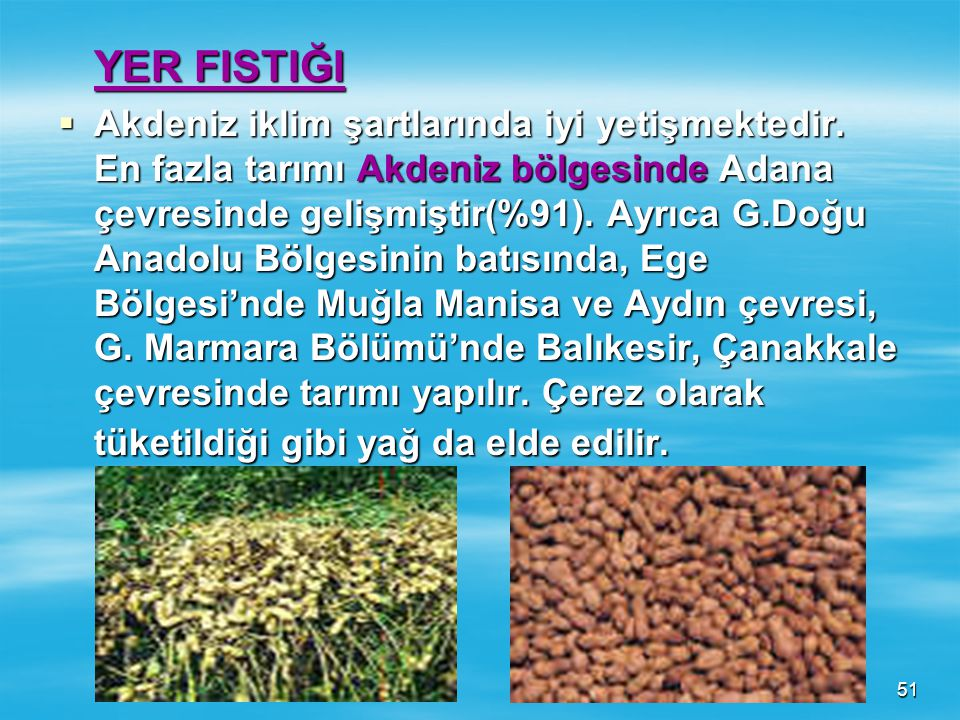 50 SOYA FASULYESİ  Önceleri daha çok Doğu Karadeniz'de Ordu- Giresun çevresinde tarımı yapılırdı. 1982 yılından sonra yağ sanayisinde kullanılmaya ba