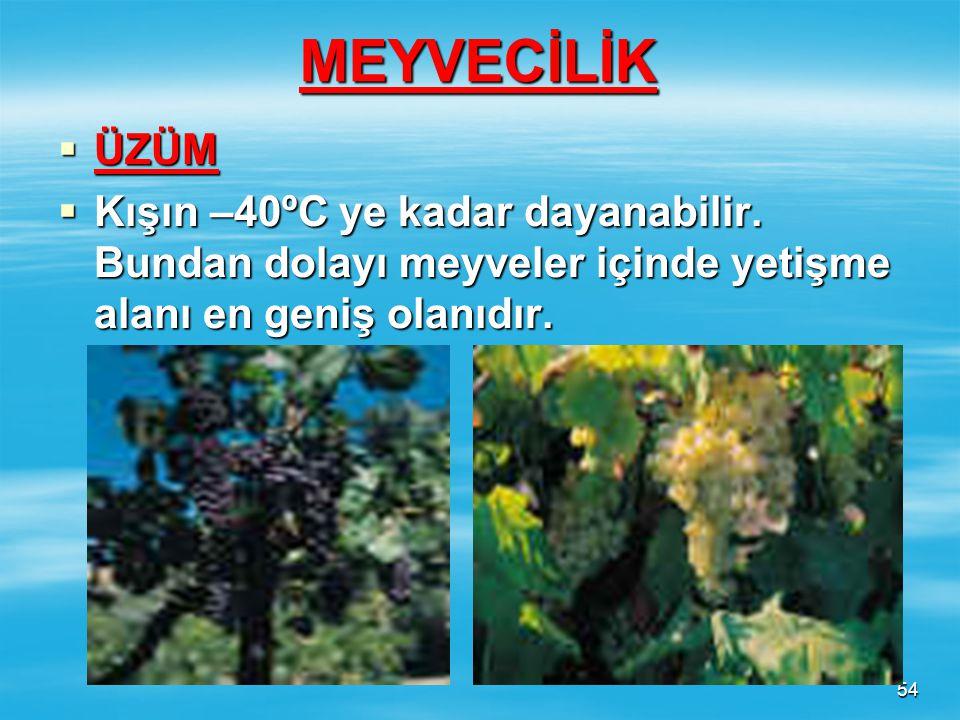 53 SUSAM  Sıcak iklim bitkisidir. Yurdumuzda başta G.Doğu Anadolu Bölgesi olmak üzere Akdeniz ve Ege Bölgelerinde tarımı yapılır. Yağ elde edilir. Ay