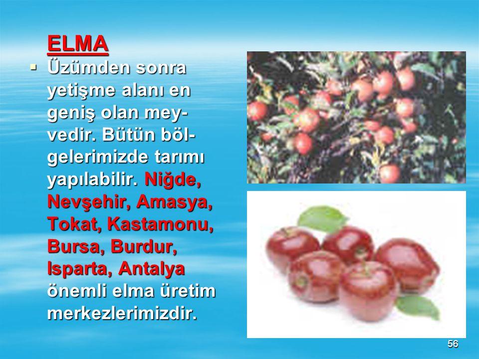 55  Üzüm üretiminde başta Ege Bölgesi (Manisa, İzmir, Denizli ) gelir. 2. G.Doğu Anadolu Bölgesidir. 3. İç Anadolu Bölgesidir.  Üzüm üretiminde başt