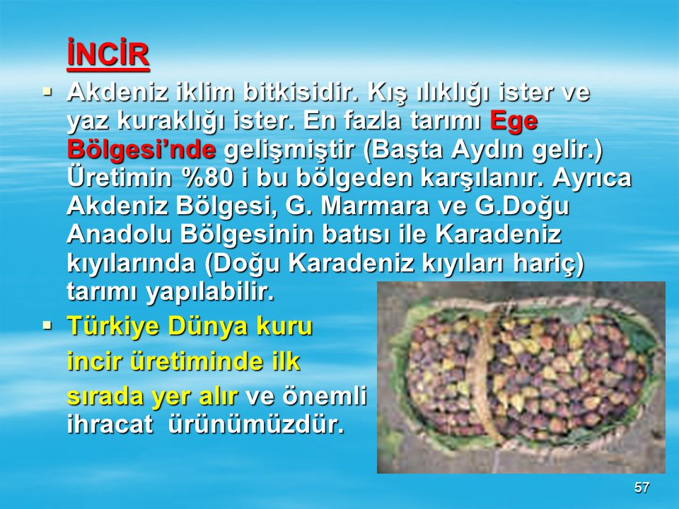 56 ELMA  Üzümden sonra yetişme alanı en geniş olan mey- vedir. Bütün böl- gelerimizde tarımı yapılabilir. Niğde, Nevşehir, Amasya, Tokat, Kastamonu,