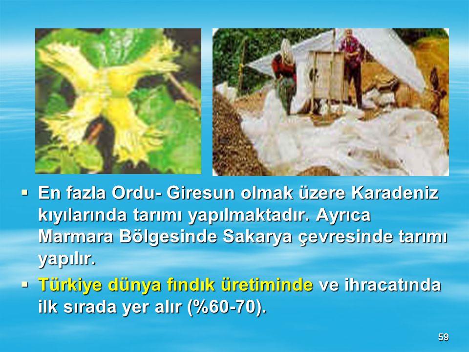 58 FINDIK  Anavatanı Türkiye'dir. En iyi yetişme şartları Karadeniz iklim bölgesidir. Yurdumuz üretiminin %90 'ını Karadeniz bölgesi karşılar.