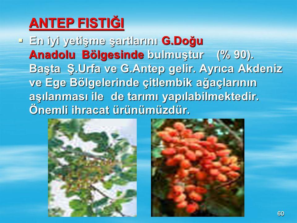 59  En fazla Ordu- Giresun olmak üzere Karadeniz kıyılarında tarımı yapılmaktadır. Ayrıca Marmara Bölgesinde Sakarya çevresinde tarımı yapılır.  En