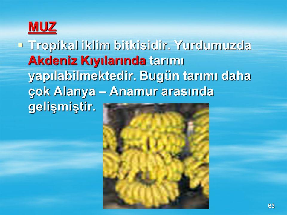 62  *** Ege Bölgesinde kıyıdan 200 km içerilere kadar tarımı yapılabilmektedir. Sebebi bölgede dağların kıyıya dik uzanması sonucu deniz etkisinin iç