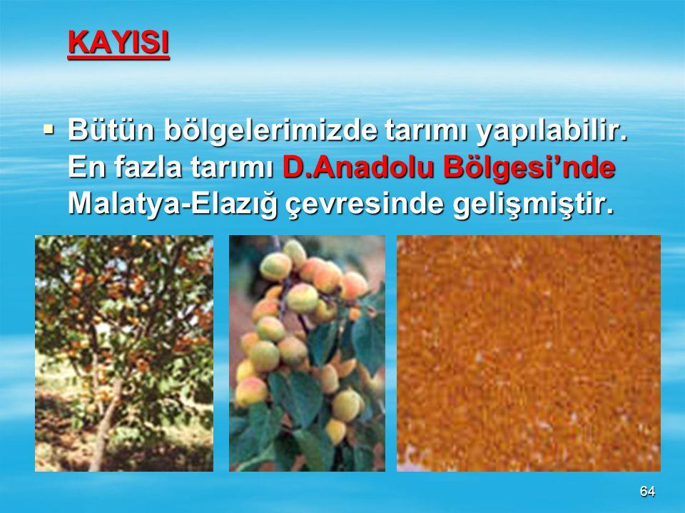 63 MUZ  Tropikal iklim bitkisidir. Yurdumuzda Akdeniz Kıyılarında tarımı yapılabilmektedir. Bugün tarımı daha çok Alanya – Anamur arasında gelişmişti