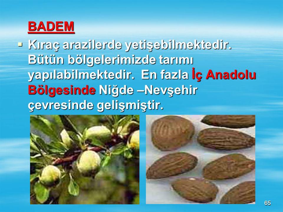 64 KAYISI  Bütün bölgelerimizde tarımı yapılabilir. En fazla tarımı D.Anadolu Bölgesi'nde Malatya-Elazığ çevresinde gelişmiştir.