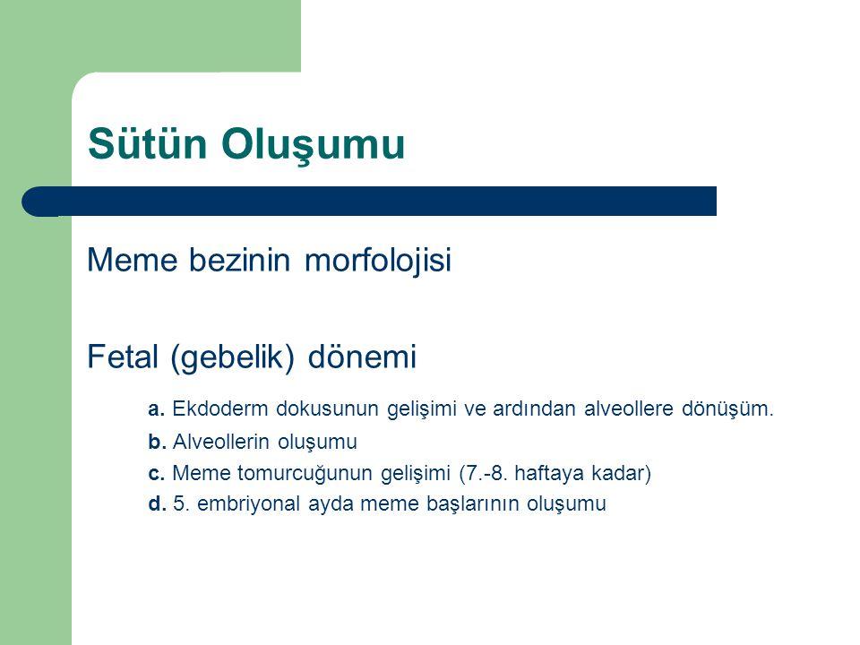 Sütün Oluşumu Meme bezinin morfolojisi Fetal (gebelik) dönemi a. Ekdoderm dokusunun gelişimi ve ardından alveollere dönüşüm. b. Alveollerin oluşumu c.