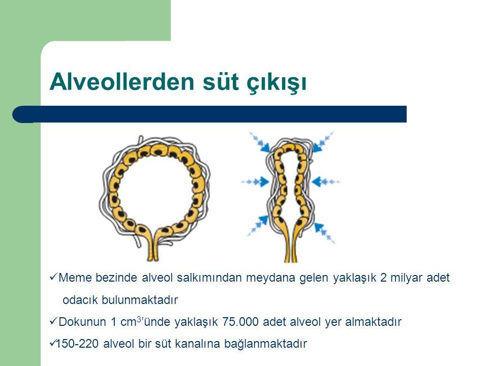 Alveollerden süt çıkışı Meme bezinde alveol salkımından meydana gelen yaklaşık 2 milyar adet odacık bulunmaktadır Dokunun 1 cm 3 'ünde yaklaşık 75.000