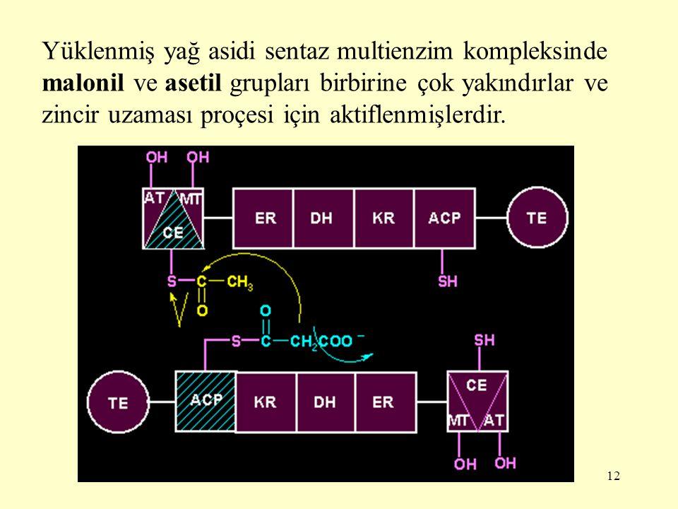 12 Yüklenmiş yağ asidi sentaz multienzim kompleksinde malonil ve asetil grupları birbirine çok yakındırlar ve zincir uzaması proçesi için aktiflenmişl