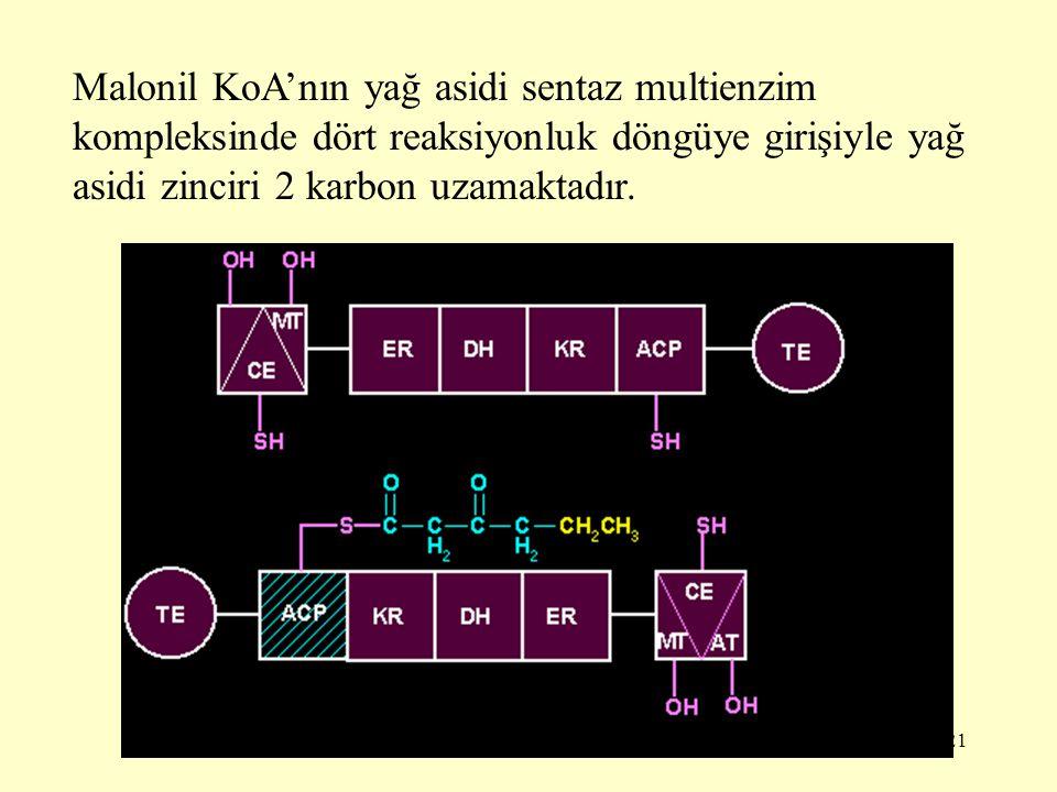 21 Malonil KoA'nın yağ asidi sentaz multienzim kompleksinde dört reaksiyonluk döngüye girişiyle yağ asidi zinciri 2 karbon uzamaktadır.