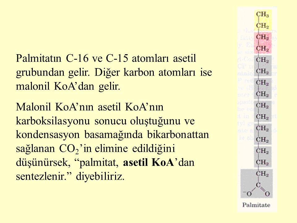 24 Palmitatın C-16 ve C-15 atomları asetil grubundan gelir. Diğer karbon atomları ise malonil KoA'dan gelir. Malonil KoA'nın asetil KoA'nın karboksila