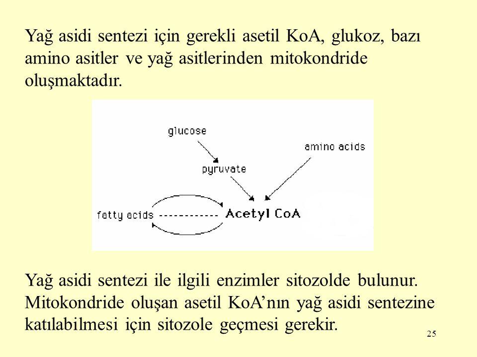 25 Yağ asidi sentezi için gerekli asetil KoA, glukoz, bazı amino asitler ve yağ asitlerinden mitokondride oluşmaktadır. Yağ asidi sentezi ile ilgili e