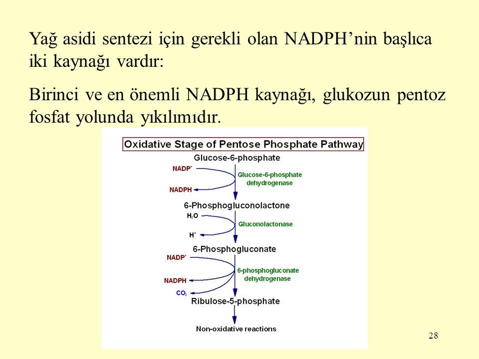 28 Yağ asidi sentezi için gerekli olan NADPH'nin başlıca iki kaynağı vardır: Birinci ve en önemli NADPH kaynağı, glukozun pentoz fosfat yolunda yıkılı