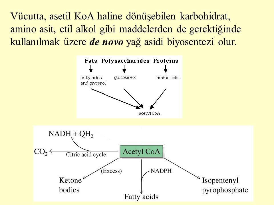 3 Vücutta, asetil KoA haline dönüşebilen karbohidrat, amino asit, etil alkol gibi maddelerden de gerektiğinde kullanılmak üzere de novo yağ asidi biyo
